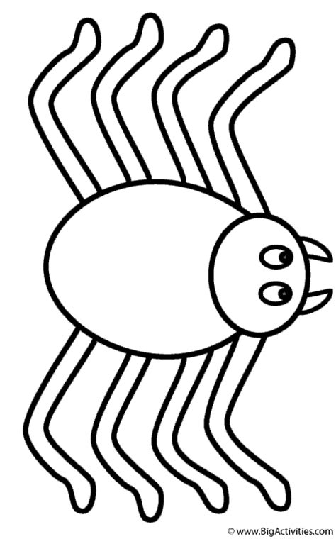 small spider coloring page spider coloring page insects