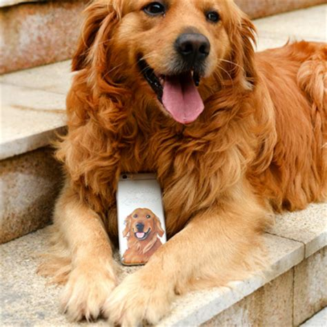 golden retriever phone phone golden retriever animal awesome cool iphone 6 6s 6plus 6s
