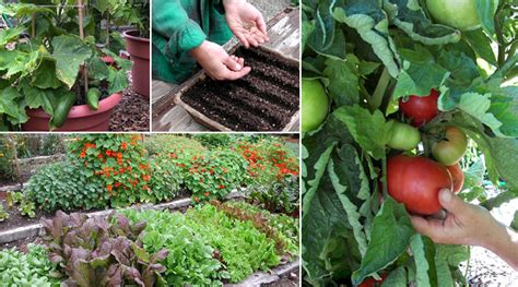 Growing A Vegetable Garden Epicurious Com Epicurious Com Plants Vegetable Garden