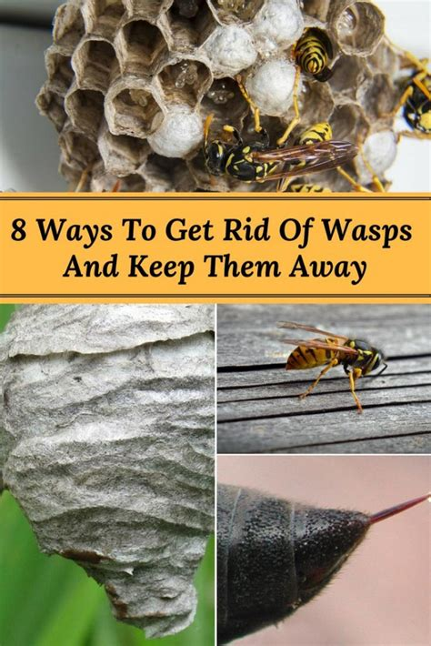 8 Ways To Get Rid Of Salesmen by 8 Ways To Get Rid Of Wasps And Keep Them From Returning