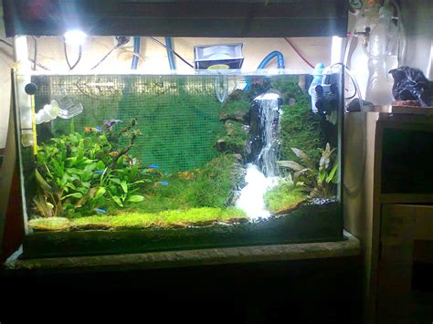 ardy cianjur bogor  membuat air terjun aquascapeaquarium