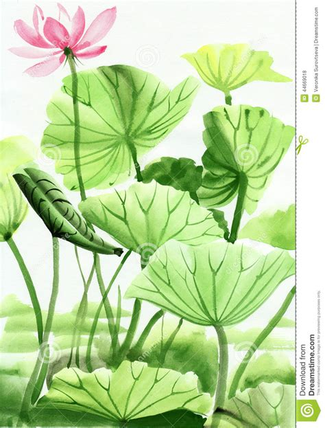 lotus flower watercolor painting stock illustration image 44669018