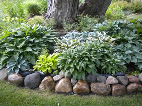 backyard plants and trees best 25 landscaping around trees ideas on pinterest