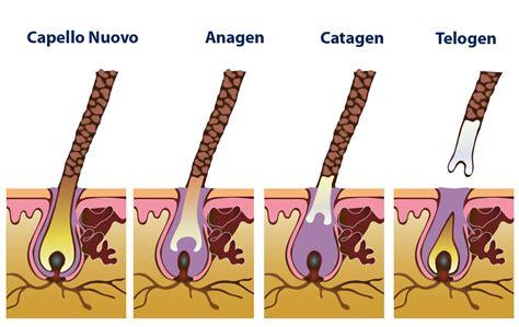 test capello come funziona il ciclo di vita dei capelli la fase anagen sanders