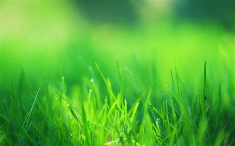 wallpaper abstract grass green grass field wallpapers hd wallpapers id 14660