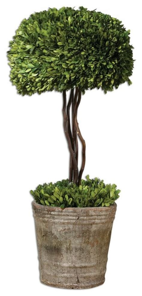indoor tree planter www essentialsinside preserved boxwood tree topiary contemporary indoor pots and