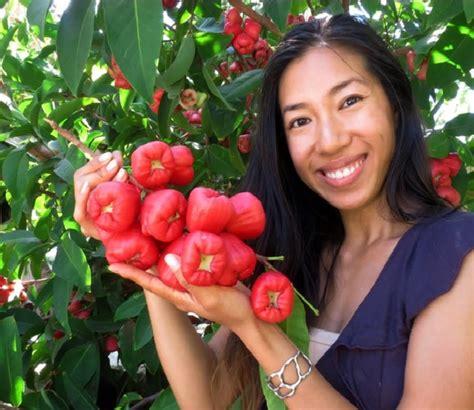 cara membuat cakwe yang cepat cara membuat tanaman cepat berbuah lebat