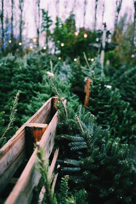 tree wallpaper pinterest trees christmas trees and iphone wallpapers on pinterest