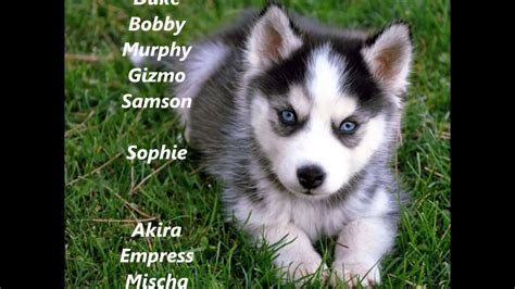 husky puppy names and husky puppy names