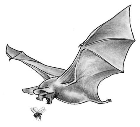 le pipistrelo pipistrelli contro le zanzare milanesi