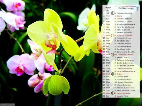fiore con la s calendario 2017 foto fiori per sfondo desktop settemuse it