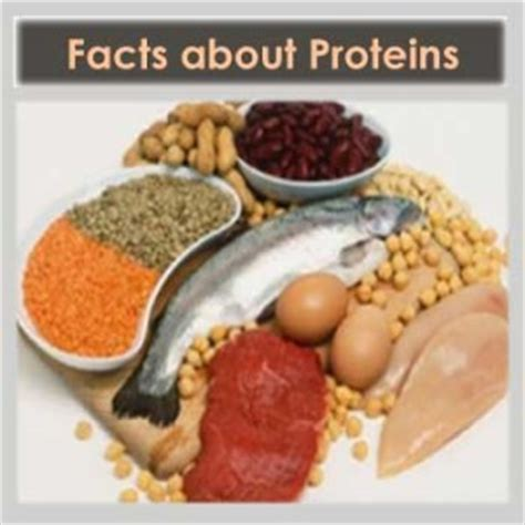 protein facts interesting facts about proteins health zen a healthy