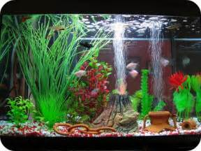 fish tank decor choosing the best aquarium decorations for your fish