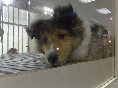 pet stores in chicago that sell puppies national pet store chain in canada to stop selling dogs promote adoptions ecorazzi