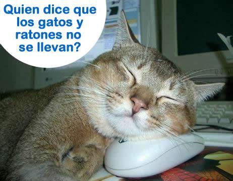 los gatos m 225 s famosos de los aprende busca juega y escucha m 250 sica aque son monos 161 161 161 161 161