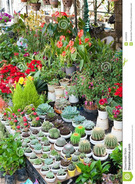 indoor plants for sale various indoor plants for sale stock image image 44360663