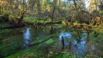 hoh rainforest olympic national park washington state