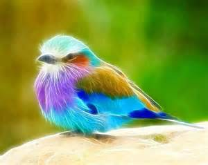 colored birds multi colored bird from amazing images quotes