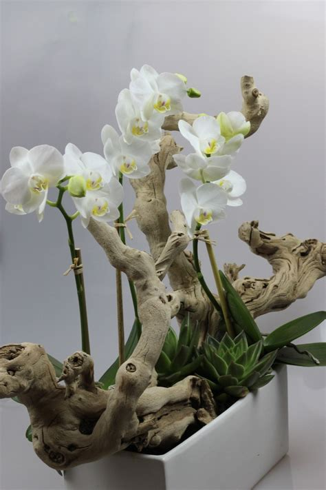 orqu 237 deas phalaenopsis arreglos and