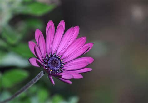 immagini fiori desktop fiori immagini gratis foto desktop scaricare