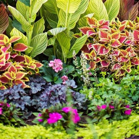 shade garden design ideas how to choose the right plants
