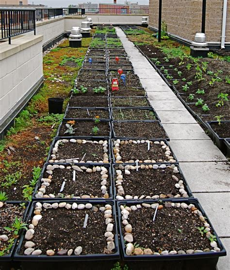 Intervale Gardens by New York City S Intervale Green Rooftop Farm