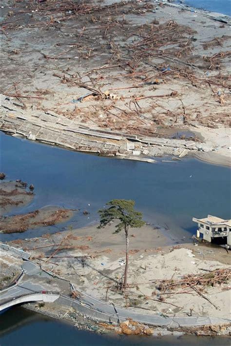 The Miracle Tsunami The Miracle Pine Neatorama