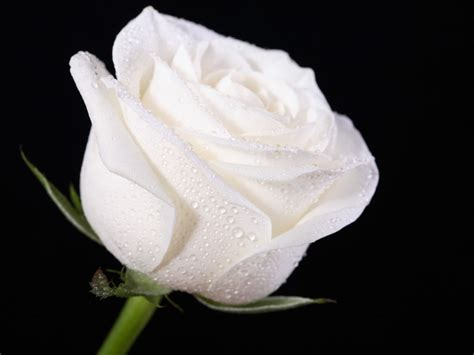 white desk top white wallpapers hd pictures flowers one hd