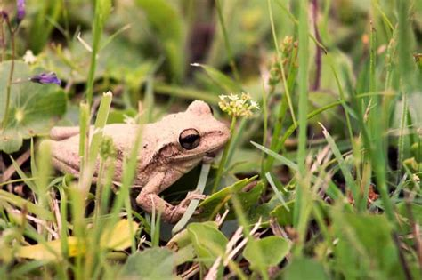 Frog Shedding Or Fungus by Facts About Frogs Shed Garden Buildings Direct