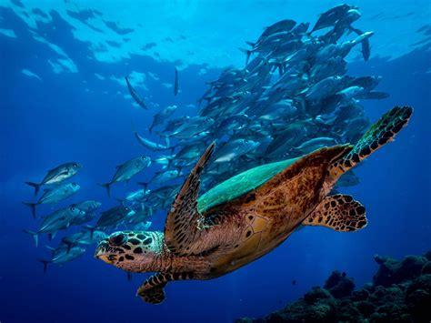 dive sight dive sight