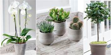 Beautiful House Plants by Stylish Potted Plants From The House Beautiful Collection