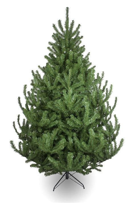 vermont pine xmas trees the mountain pine tree 4ft to 14ft