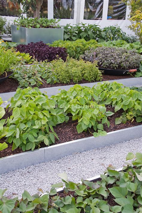 modern vegetable growing plant flower stock