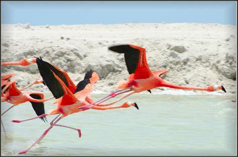 flamingo facts the garden of eaden