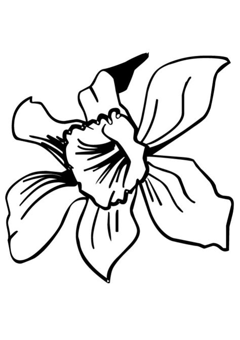 coloring page iris flower coloring pages daffodil