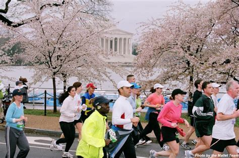 cherry tree 10 miler the 30 before 30 project cherry blossom 10 mile run