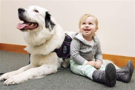 service seizure groundbreaking vest lets service pups quot talk quot to handlers barkpost