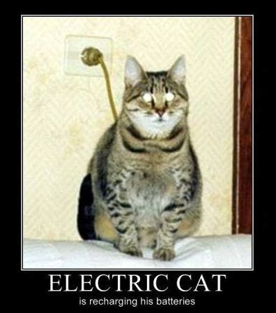 images  electrical humor  pinterest cats
