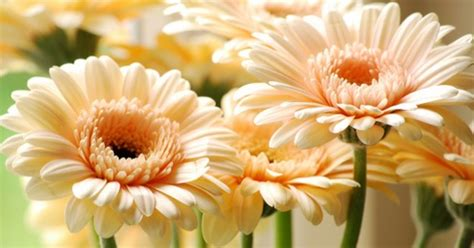 imagenes de rosas alegres flores favoritas foro organizar una boda bodas com mx