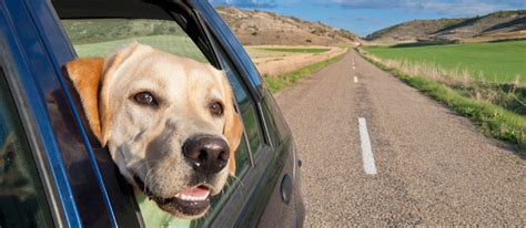 how to get dog hair out of car upholstery 10 tricks to get dog hair out of your car hot dog blog