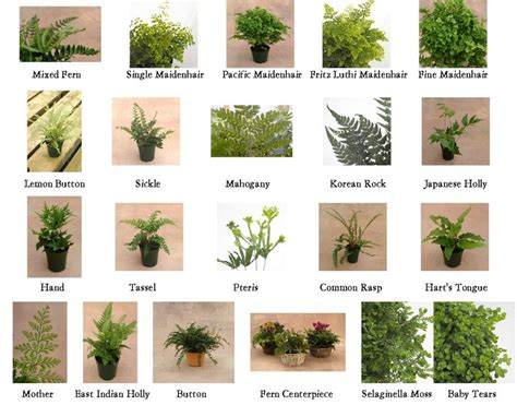 Types Of Garden Flowers Types Of Ferns 1 10 From 50 Votes 5 54 Picture Pl Ferns Ferns And Types