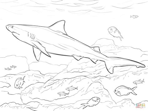 realistic bull shark coloring page free printable