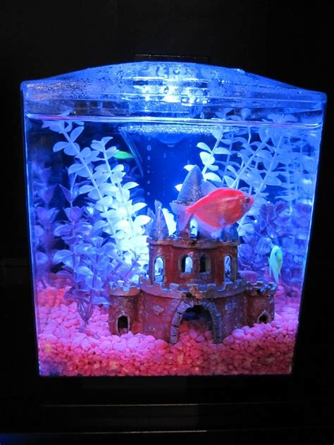 70 best images about glofish on glow neon and