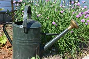 Watering Garden by How Much Water Is Enough For Your Garden Try The Finger