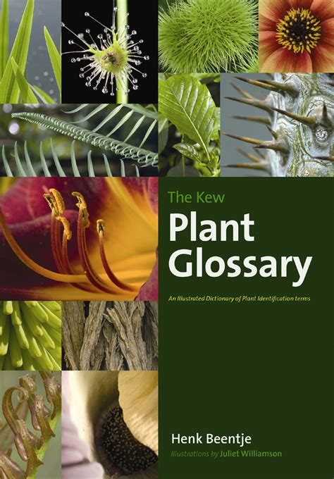 the kew plant glossary an illustrated dictionary of plant terms beentje