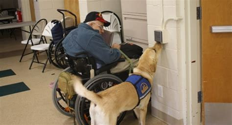 ptsd service dogs able veterans proudly supporting wounded soldiers