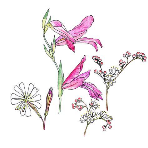 tutti i nomi di fiori fiori di co forum natura mediterraneo forum
