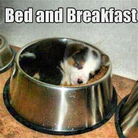 Breakfast In Bed Meme - best 25 puppy meme ideas on pinterest