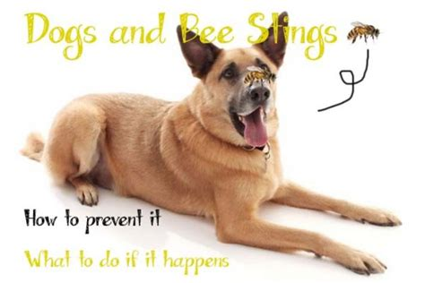 stung by bee on paw stung by bees on paw limping vomiting benadryl