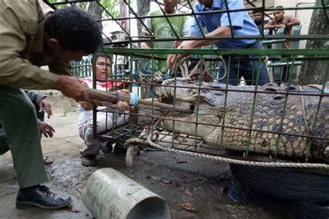Pancing Banda Aceh tanpa bius mata pancing ini dikeluarkan dari mulut buaya